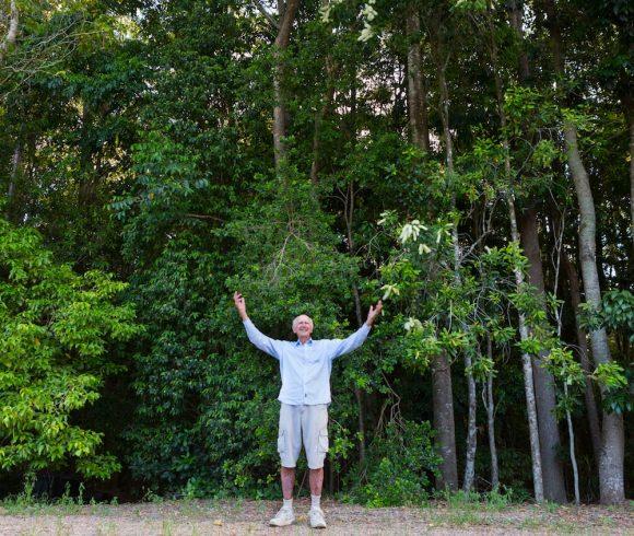 Re-establishing Rainforest