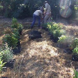 Ecological Restoration Tips – Getting Ready for Spring