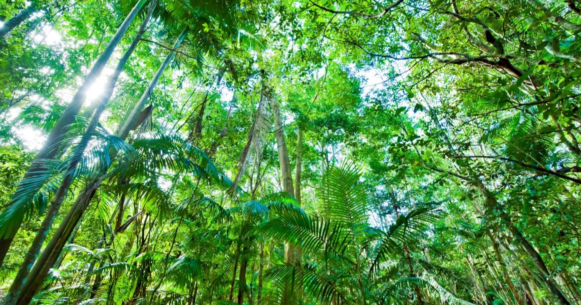 Update: Science Saving Rainforests Program