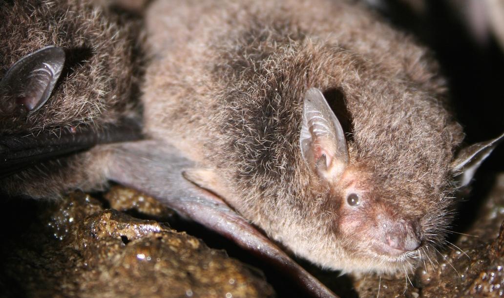 Big Feet, Small Bat
