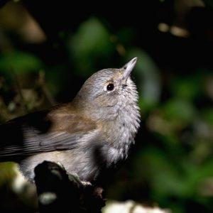 Don't Panic – Identifying Birds