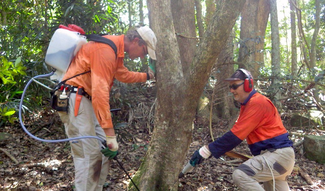 Camphor Conversion Projects in the Big Scrub