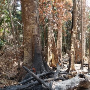 Saving our Rainforests from Fire