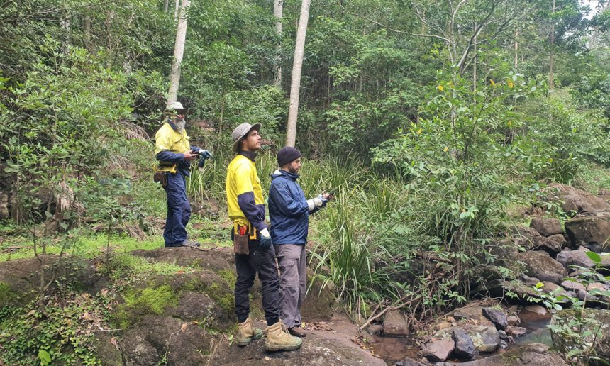 Camphor conversion to rainforest project