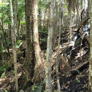 Join the fiery discussions to celebrate Big Scrub Rainforest Day 2020