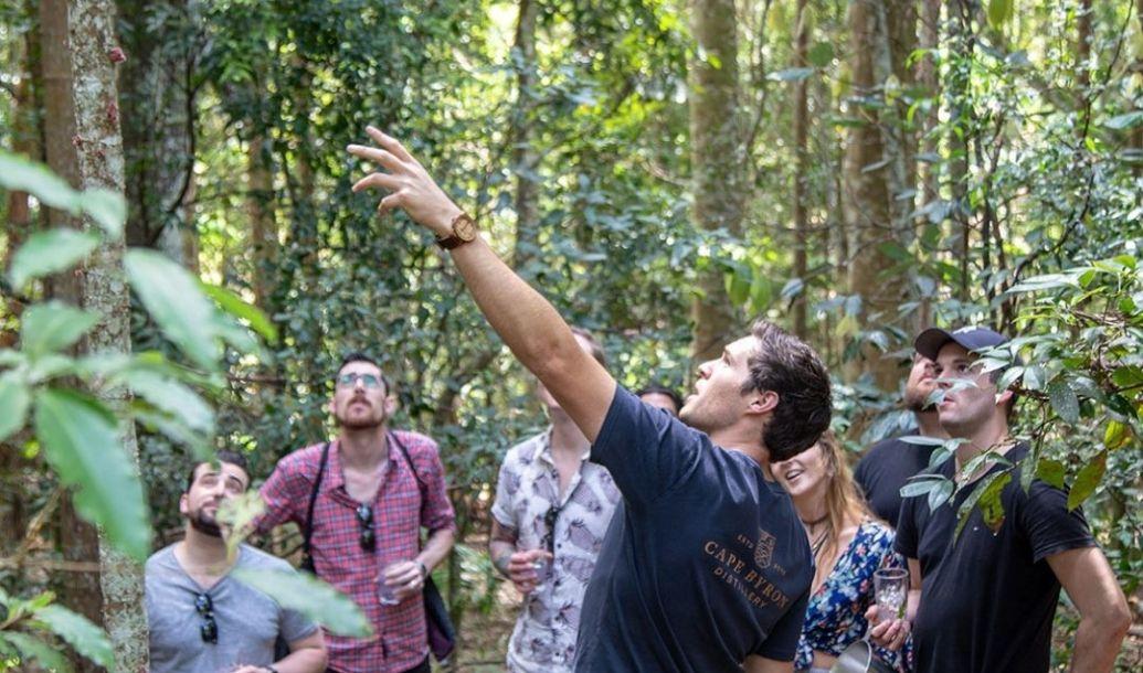 Brookfarm's transformation from desolate farm to towering rainforest