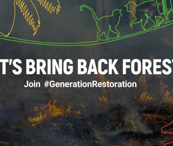 UN Decade of Restoration: Celebrating 25 years of restoration and anticipating the decade ahead
